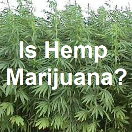 Is hemp marijuana?